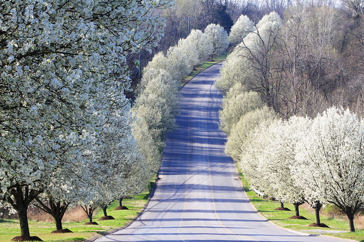 tree-lined road, Nashville, Tennessee